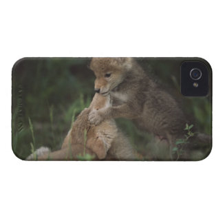 Coyote Puppies Wrestling (Canis Latrans) Case-Mate iPhone 4 Case