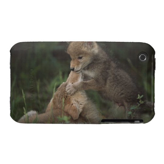 Coyote Puppies Wrestling (Canis Latrans) iPhone 3 Case-Mate Case