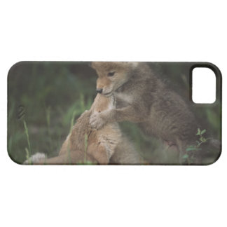 Coyote Puppies Wrestling (Canis Latrans) iPhone SE/5/5s Case