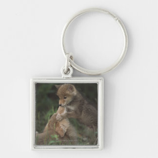 Coyote Puppies Wrestling (Canis Latrans) Keychain