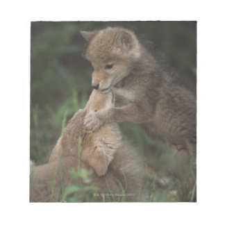 Coyote Puppies Wrestling (Canis Latrans) Note Pad