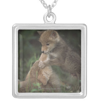 Coyote Puppies Wrestling (Canis Latrans) Silver Plated Necklace