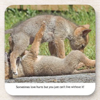 Coyote Pups Biting and Playing Drink Coasters