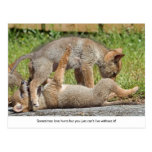 Coyote Pups Biting and Playing Post Card