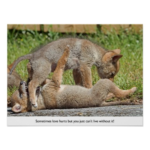 Coyote Pups Biting and Playing Print