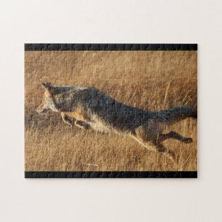 coyote puzzles