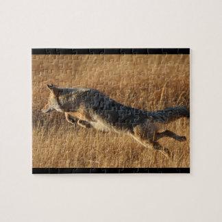 coyote puzzle con fotos