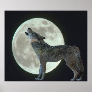 Coyote que grita en la luna póster