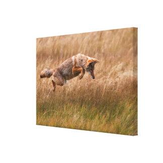 Coyote que salta - prados del Gibbon Lona Estirada Galerias