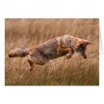 Coyote que salta - prados del Gibbon Tarjeta De Felicitación