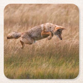 Coyote que salta - prados del Gibbon