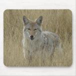 Coyote R0002 en hierba alta Alfombrilla De Raton
