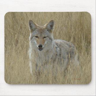 Coyote R0002 en hierba alta Alfombrillas De Ratón