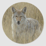 Coyote R0002 Etiquetas Redondas
