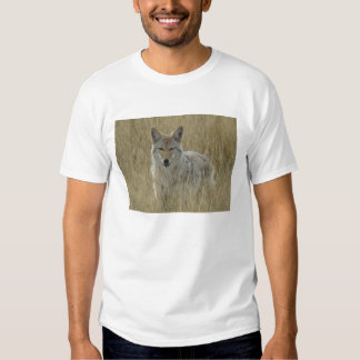Coyote R0002 Polera