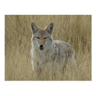 Coyote R0002 Postal