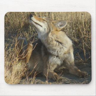Coyote R0017 que rasguña el cojín de ratón Alfombrillas De Raton