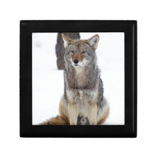 Coyote sitting in the snow jewelry box