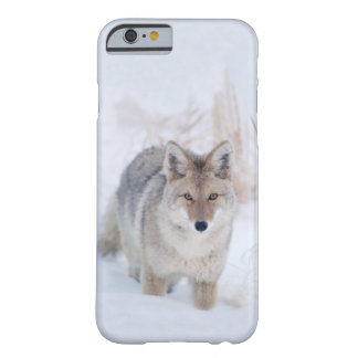 Coyote Standing in Snow at Yellowstone NP Barely There iPhone 6 Case