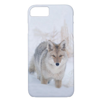 Coyote Standing in Snow at Yellowstone NP iPhone 8/7 Case