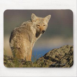 Coyote Alfombrilla De Ratón