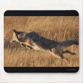 coyote tapete de raton