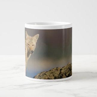 coyote taza grande