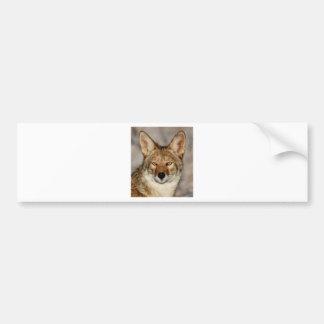 coyote up close bumper sticker