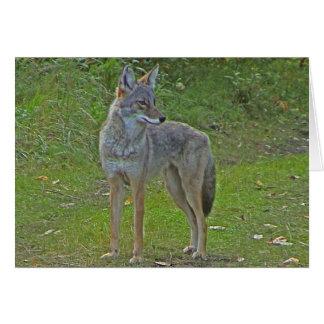 Coyote (vista lateral) tarjeta de felicitación