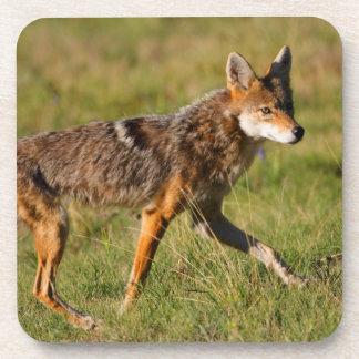 coyote walking drink coaster