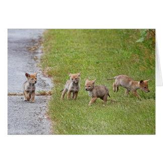 Coyotes del bebé que corren y que juegan tarjeta de felicitación