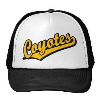 Coyotes in Orange Mesh Hat