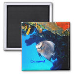 Cozumel Angelfish 2 Inch Square Magnet