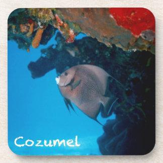 Cozumel Angelfish Coaster
