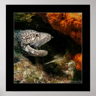 Cozumel - anguila Brown-manchada #002 Póster