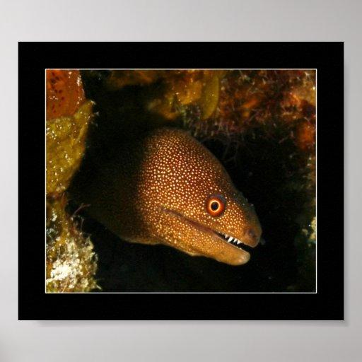 Cozumel - anguila de Moray Póster