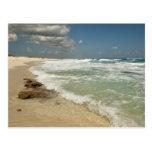 Cozumel Beach Postcard