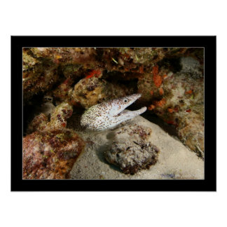 Cozumel - Brown-spotted Eel #001 Poster