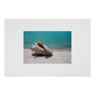 Cozumel Conch Shell Poster