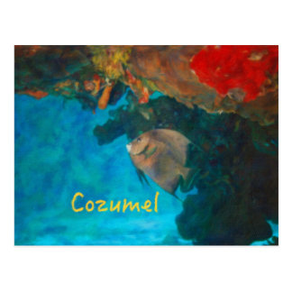 Cozumel Coral Reef Postcard