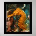 Cozumel - naranja Seahorse#2 Posters