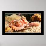 Cozumel - Octopus #4 - 11-2009 Print