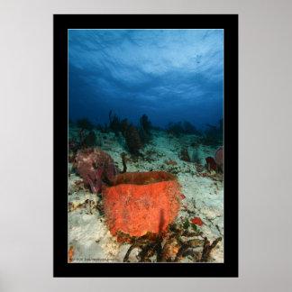 Cozumel - Reef #2 - 11-2009 Poster