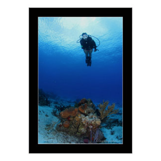 Cozumel Reef Diving #1 Poster