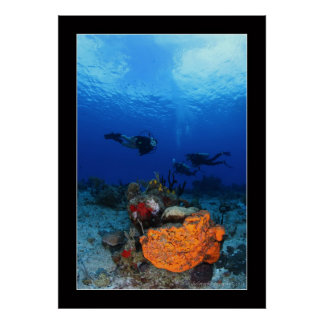 Cozumel Reef Diving #2 Poster