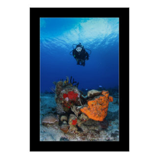 Cozumel Reef Diving #3 Posters