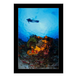 Cozumel Reef Diving #4 Poster