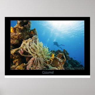 Cozumel Reef Poster