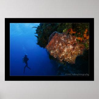 Cozumel Reef Scene #001 Poster