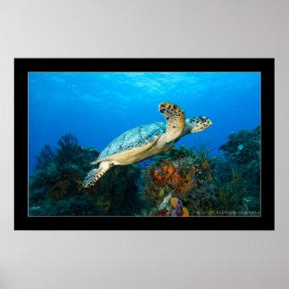 Cozumel - tortuga #5 - 11-2009 póster
